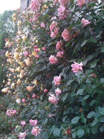 B&B Bus de L'Och: rose a maggio
