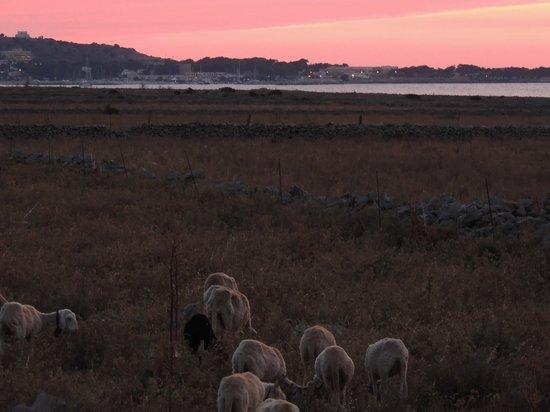 Residence Baglio del Sole : Panorama al tramonto