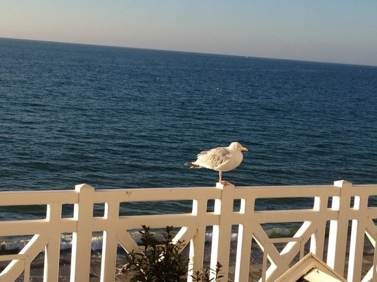 Hotel Beaufort: afternoon visitor