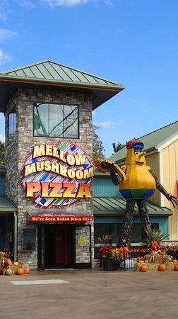 Mellow Mushroom at the Island in Pigeon Forge : Mellow Mushroom