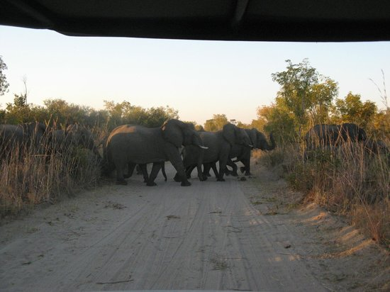 Hwange Main Camp : Watch for pedestrians - they're bigger than you