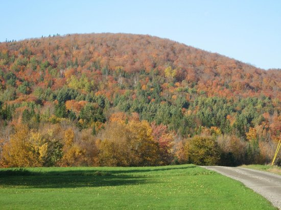 Rodgers Country Inn & Cabins: hillside view from Rodgers Country Inn