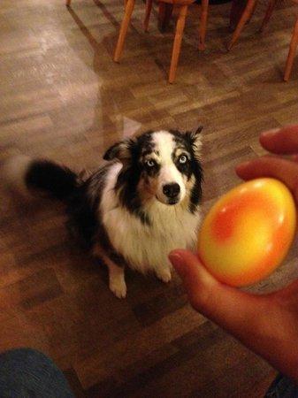 Gasthof Schonegg: Dog