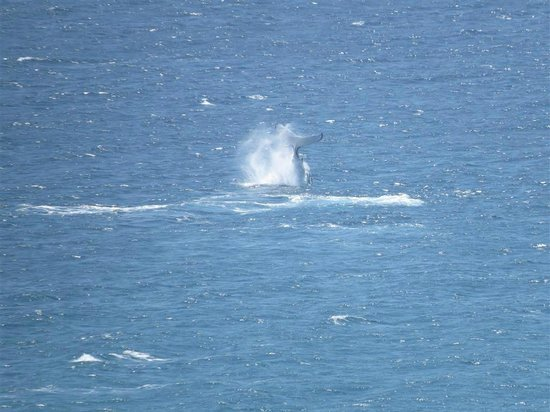 The Wave Resort: Whales Frolicking in front of Wave Apartments