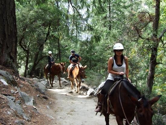Ride 39 em cowboy picture of yosemite mule horseback for Where to go horseback riding near me