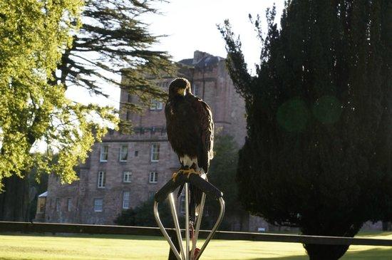 Dalhousie Castle: Falcon Experience