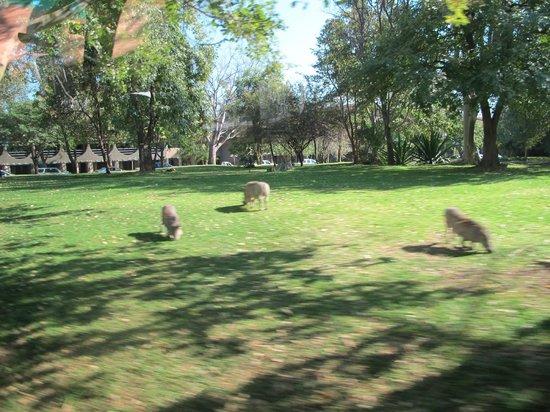 Elephant Hills Resort: Pumbas...