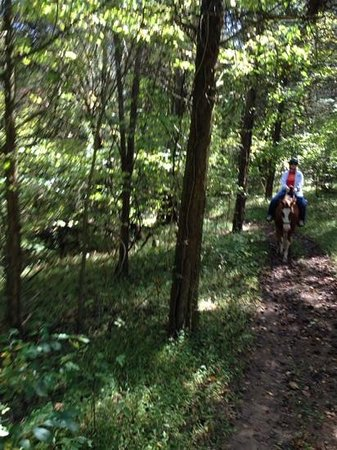 Jordan Hollow Stables: Riding through the woods at Jordan Hollow