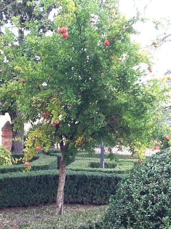 Villa Curina Resort: Pomegranate tree in the garden
