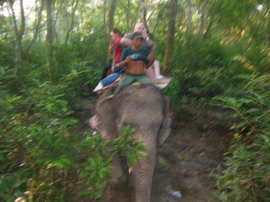 Hotel Seven Star : elephant treck at daybreak.