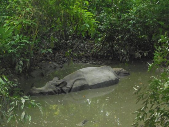 Hotel Seven Star : the famous chitwan national park's white Rhino and calf