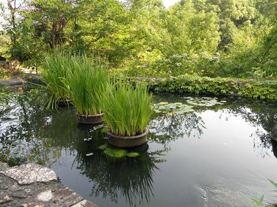 Okayama International Hotel: The pond