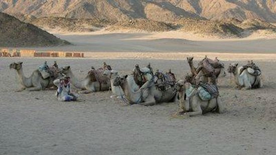 Club Marmara Decouverte du Nil: balade en dos de chameau