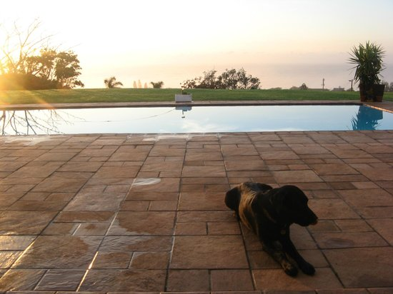 Ocean View Bed and Breakfast: Pool and the most playful dog you'll ever meet!