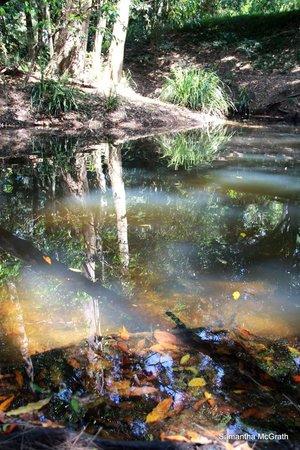 'Brooloo Park' Eco Retreat & Equine Resort : the creek