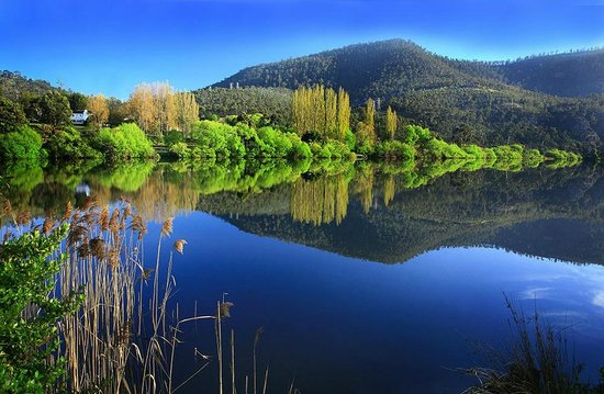 Platypus Riverside Cottage: Derwent River