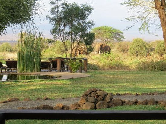 Tawi Lodge: Wasserloch