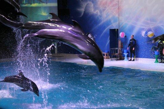Dolphine Show Picture Of Dubai Dolphinarium Dubai