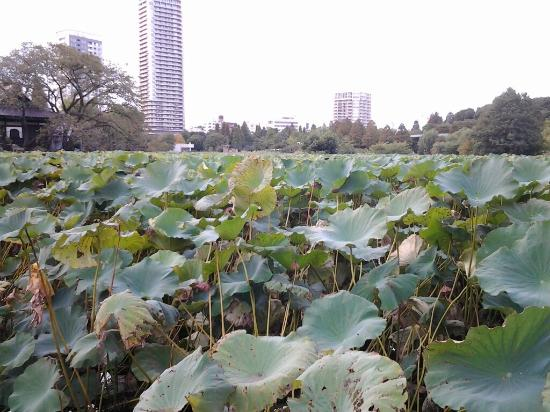 Photo of Shinobazu Pond taken with TripAdvisor City Guides