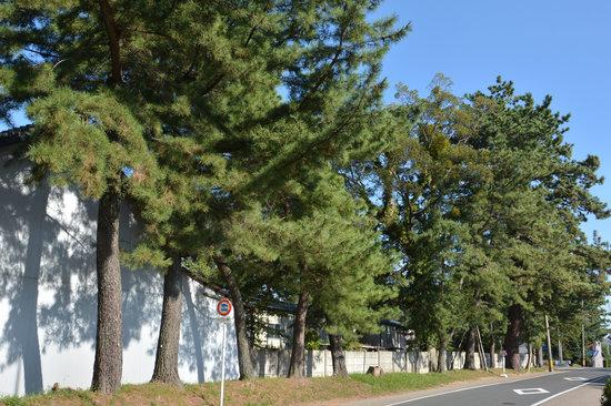Goyu Street: 御油の松並木