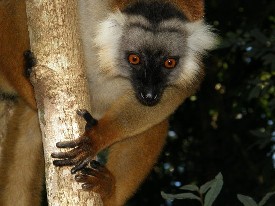 Lokobe Nature Special Reserve : Immer neugierig
