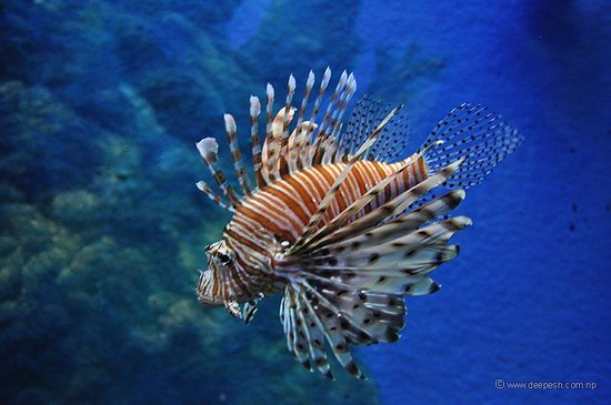 ซีไลฟ์ แบงคอก โอเชี่ยน เวิร์ล: I'm not sure what this fish is called.