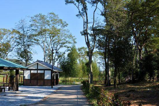 Goyu Street: 御油の松並木公園