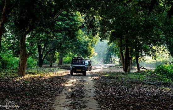 Aahana the Corbett Wilderness: Safari