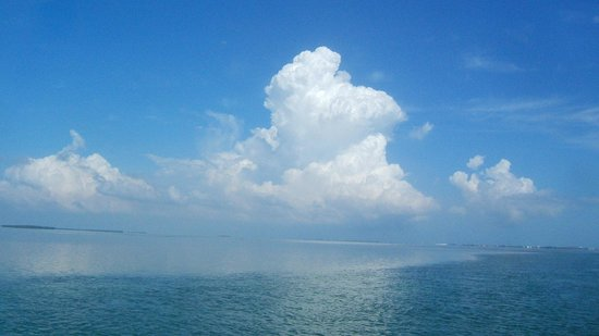 Kayak Kings Key West: Random shot from the boat