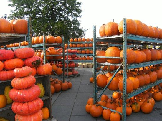 Atwater Market : Pumpkins plentiful in the fall season.