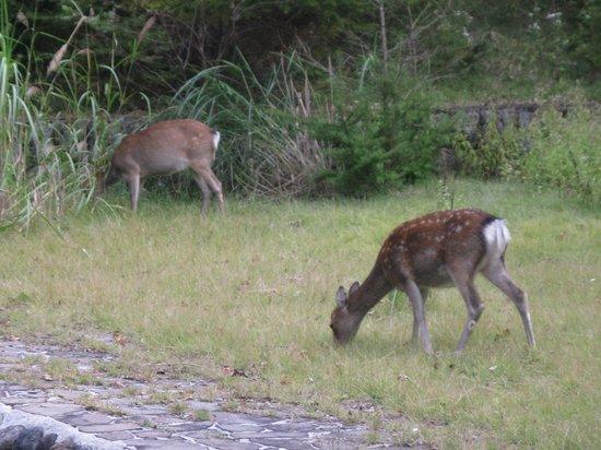 Italian Embassy House Memorial Park: 近くに鹿がいました!!