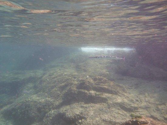 The Racha: Unterwasserwelt