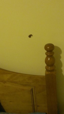 Lyndon Guest House: Slug