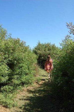 Onar: path to beach