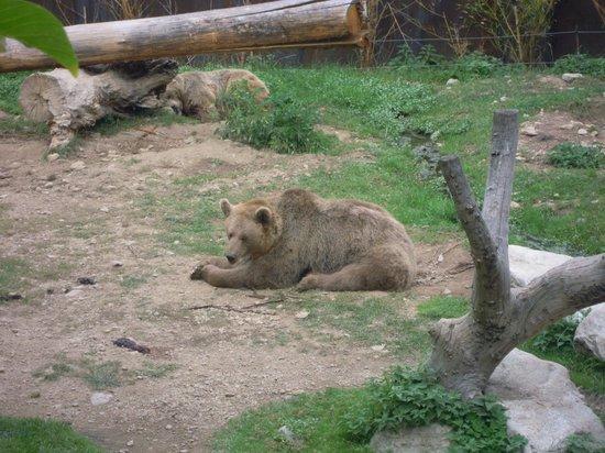 Parc Animalier de Casteil : les ours