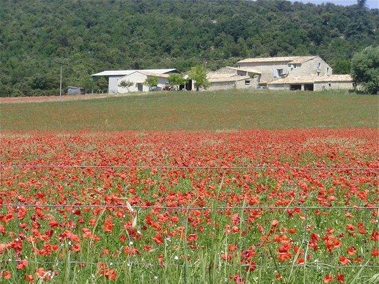 Near Forcalquier Provence