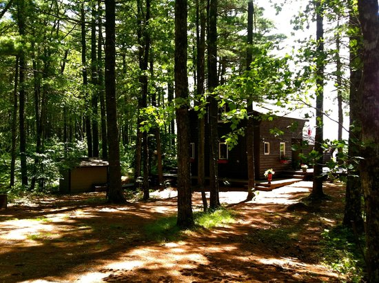 Morning Mist Cottage Retreat: Forest has 150 foot pines and hard wood