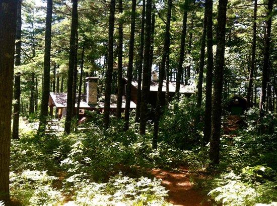 Morning Mist Cottage Retreat: Forest and Sunshine