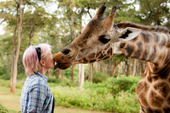 Giraffe Manor: Love it!
