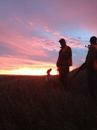 Comstock Premier Lodge LLC: The end of a really nice Pheasant hunt