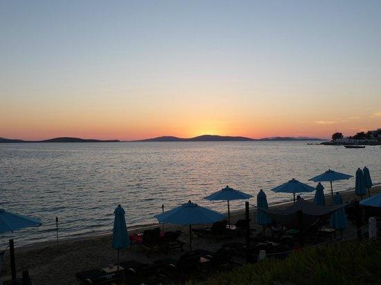 Hippie Fish: sunset view 2