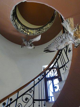 Museo Provincial de Ciencias Naturales y Oceanografico: Birds of prey