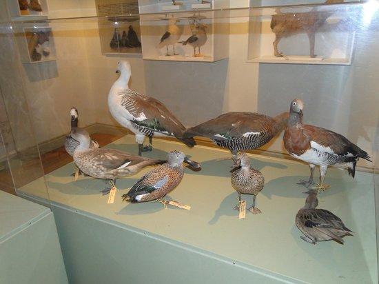 Museo Provincial de Ciencias Naturales y Oceanografico: Feathered friends