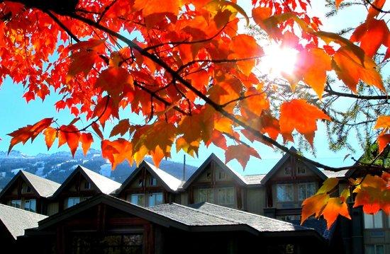 Aava Whistler Hotel: Autumn Beauty