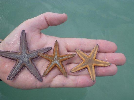 Hotel Riu Palace Tropical Bay: Starfish in the ocean