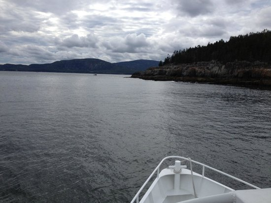 Acadian Boat Tours: Looking off the bow