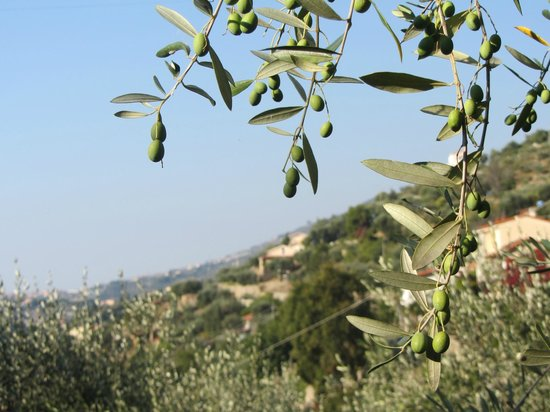 Ca di Pigai: Olives in the Garden