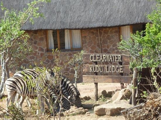 Clearwater Lodges - Kudu & Tsetshepi: Zebra drinking from the pond at the lodge entrance