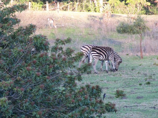 Rothman Manor: From the garden you can see the Mountains Zebra