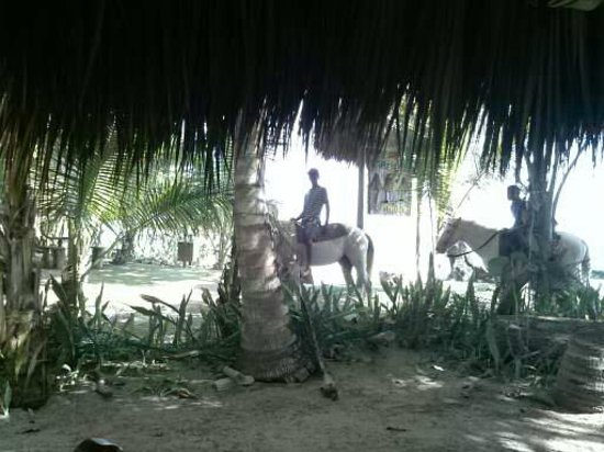 Natura Cabana Boutique Hotel & Spa : Horse back riders